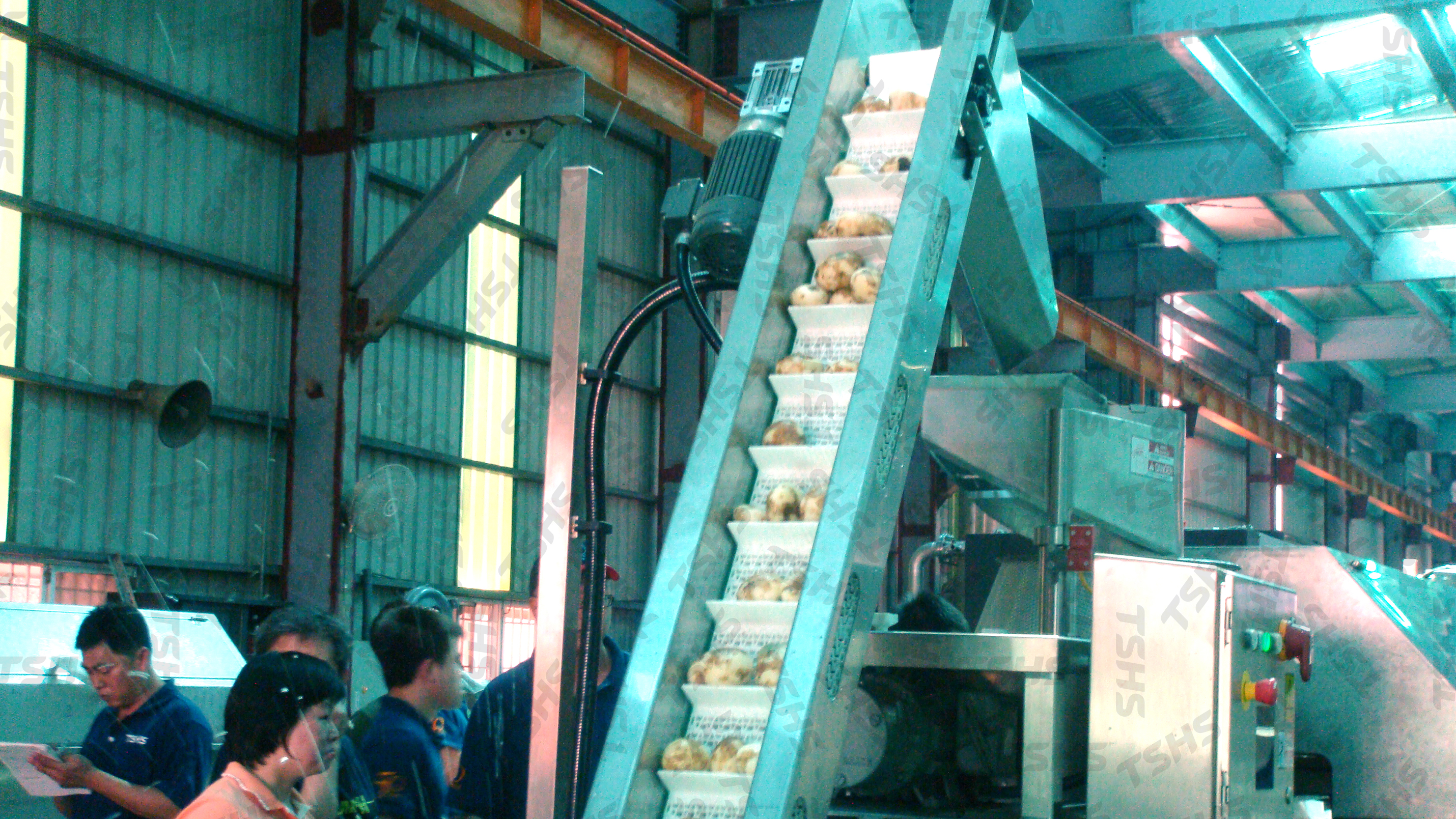 Potato Chips Production Line-Feeding Conveyor for Slicing M/C