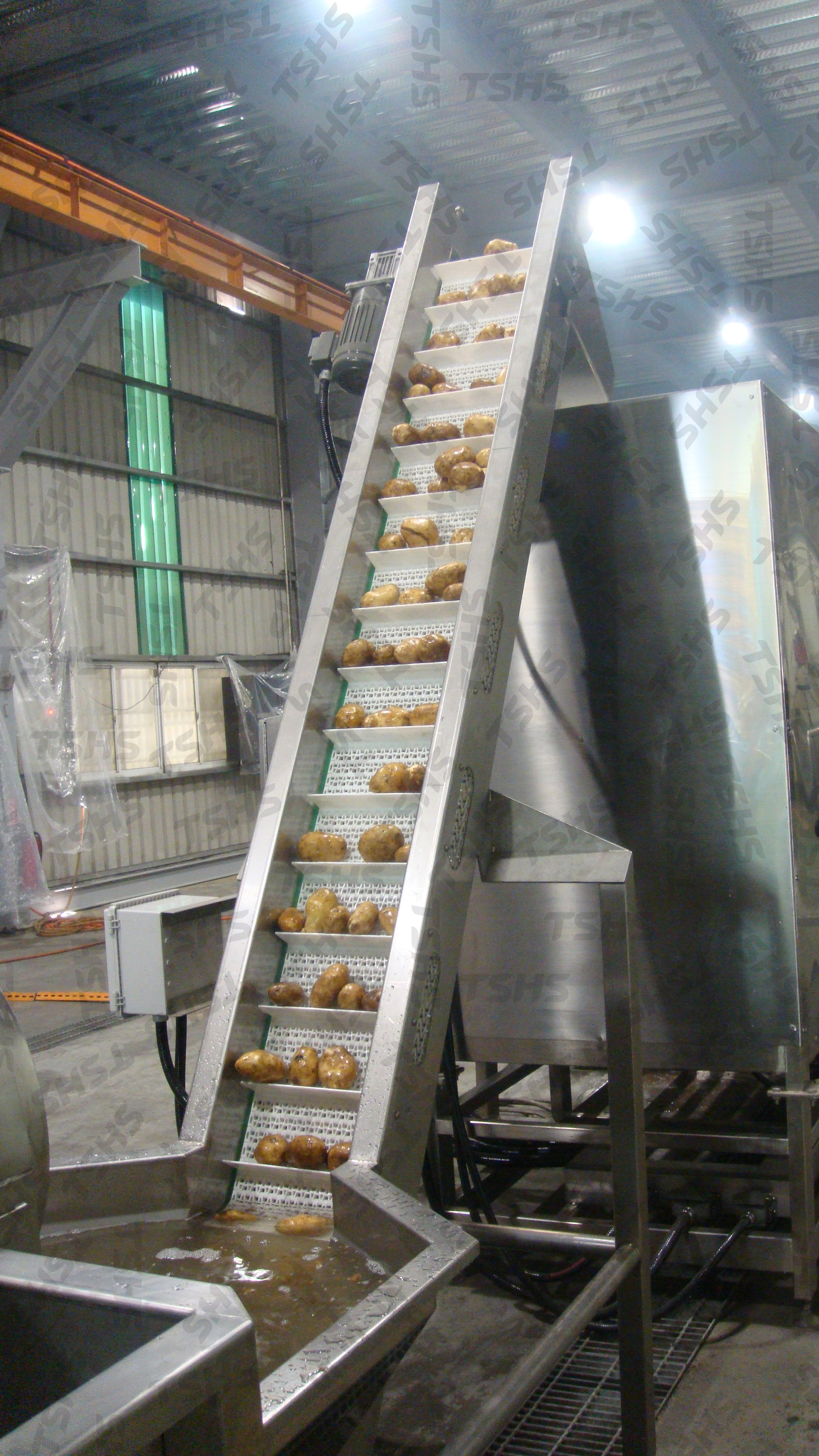 potato_chips_production_line- Feeding Conveyor for Peeling M/C